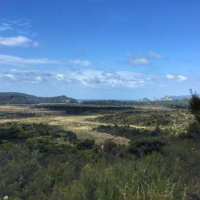 Wai te Puia Kaitoke Wetland