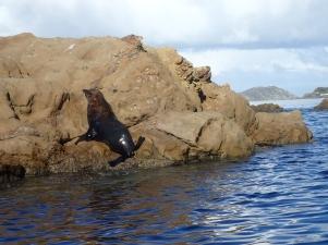 The Lone Local Sea Lion