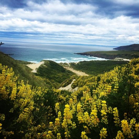 Sandfly Bay Otago Peninsula