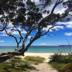 Random Neighborhood Beach Near Opito Bay Coromandel