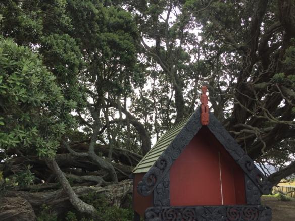 Te-Waha-O-Rerekohu, largest Pōhutukawa Tree, Significant To Local Iwi