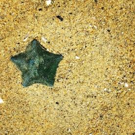 Starfish at low tide