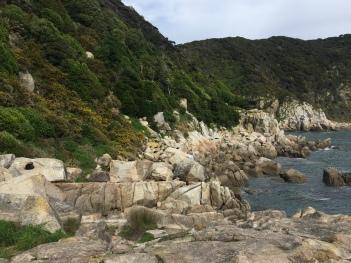Seals sleeping amongst the rocks