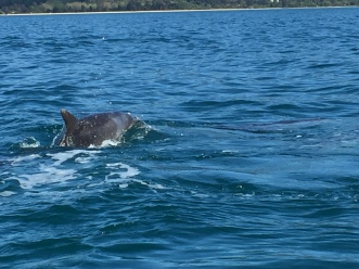 Dolphins came to play