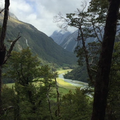 Routeburn river winding through beech forest