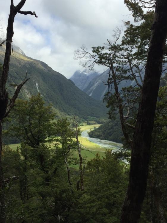 Routeburn river winding through beech forest
