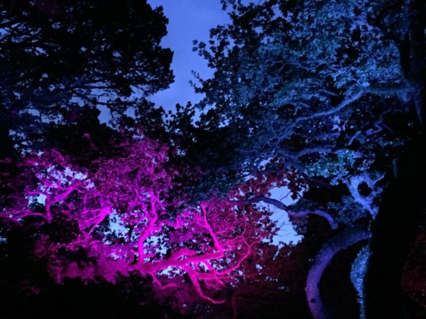 Bot garden summer lights