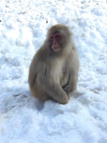 Jigokudani_Japanese Macaque9